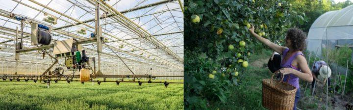Cambiare modello: Permacultura anziché agricoltura tecnologica