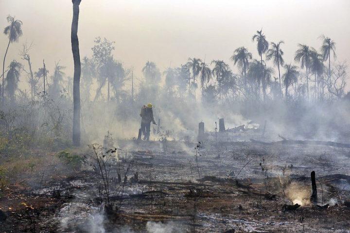 Governo brasileiro na contramão do Direito Constitucional Ambiental
