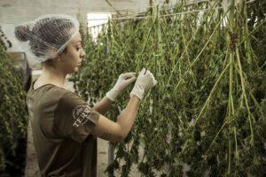 Colombia debe replantear su lucha contra las drogas
