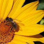 Diritti e doveri umani: gestione sostenibile della biosfera