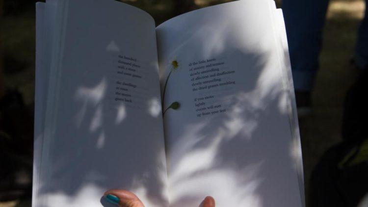 Une bibliothèque pour se promener dans la forêt