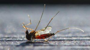 Wie das Zählen von Bienen, Mücken, Schmetterlingen gegen das Insektensterben hilft