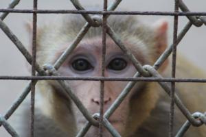 Neue EU-weite Umfrage: Bürger wollen verbindlichen Plan zur Abschaffung von Tierversuchen in Europa