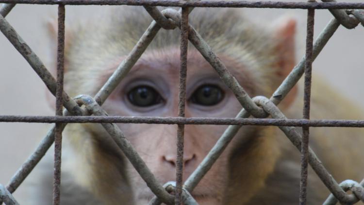 Bürger wollen verbindlichen Plan zur Abschaffung von Tierversuchen in Europa, so eine neue EU-weite Umfrage