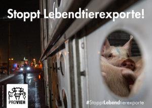 Erfolg: Bundesländer verbieten Lebendtierexporte!