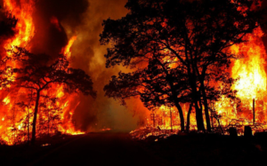 Forest Fires: Stop the Massacre, Kabylie Burns!