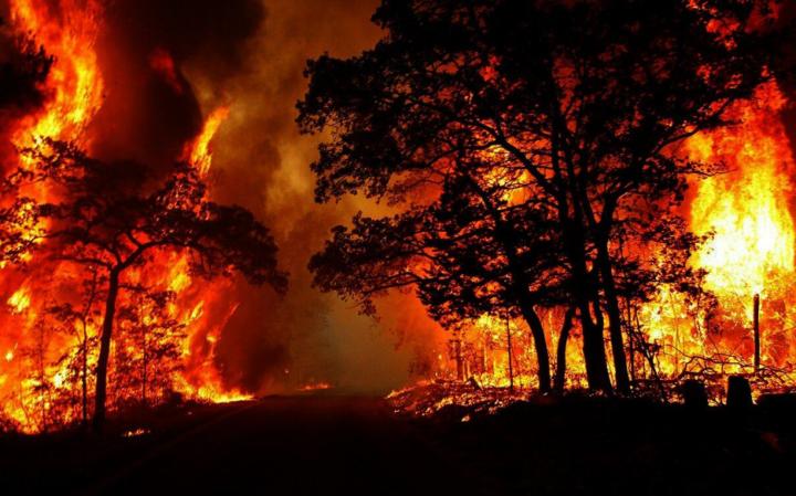 Forest Fires: Stop the Massacre, Kabylie Burns!