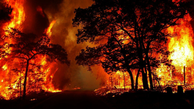 Feux de forêt : arrêtez le massacre, la Kabylie brûle !
