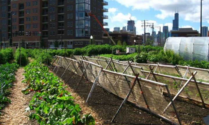54 Million People in the U.S. May Go Hungry During Pandemic—Can Urban Farms Help?