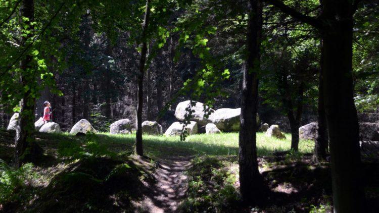 bosque - Bo Lind Knudsen