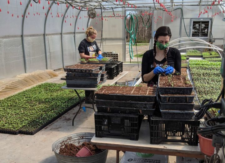 While Big Food Supply Chains Have Stalled Due to Lockdown, an Organic CSA Farm Has Risen to the Challenge