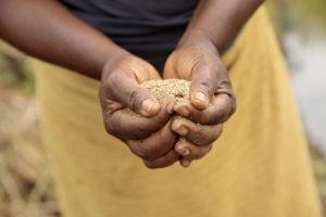 Cómo las agroindustrias lideradas por mujeres mejoran la nutrición en África