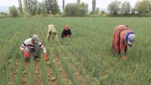 Amasya'daki hidroelektrik santraller tarımı bitirdi