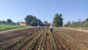 La CSA di Roma: la comunità che supporta l'agricoltura e costruisce nuovi legami – Io faccio così #298