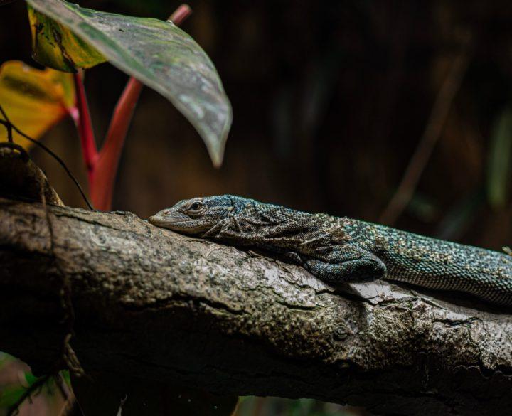 Disminuye drásticamente población de vertebrados en un 68%: WWF