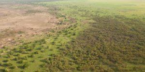 Africa, avanti con la 'Grande Muraglia Verde': ma 18 milioni di ettari non bastano