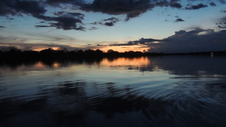 Preocupante pérdida de la biomasa amazónica