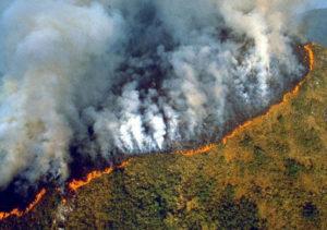 """Umweltkonfliktforscher: """"Bolsonaro ist der Nero Amazoniens"""""""