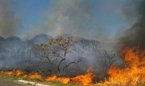 O Brasil está em chamas. Aqui está o motivo