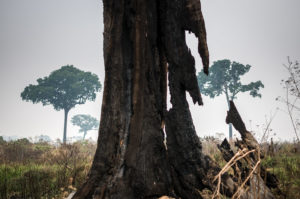 Servidores denunciam ordem do Ibama para retirada de brigadistas dos incêndios nas florestas