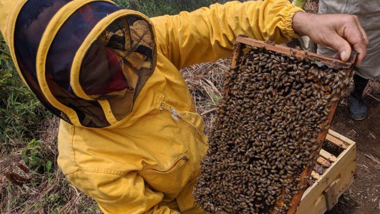 Colombia: Miel de la Montaña, una contribución a la paz