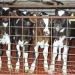 1 million signatures to stop intensive farming