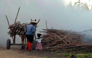 CUT nacional lança campanha pelo fim do trabalho infantil