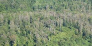Warum die Corona-Debatte an den Waldalarm erinnert