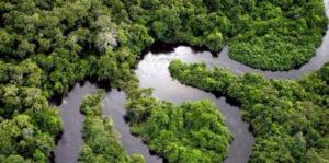 Teile des Amazonasregenwalds könnten bald zur Savanne werden
