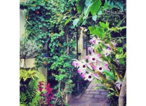 Falando de flores raras e perdas