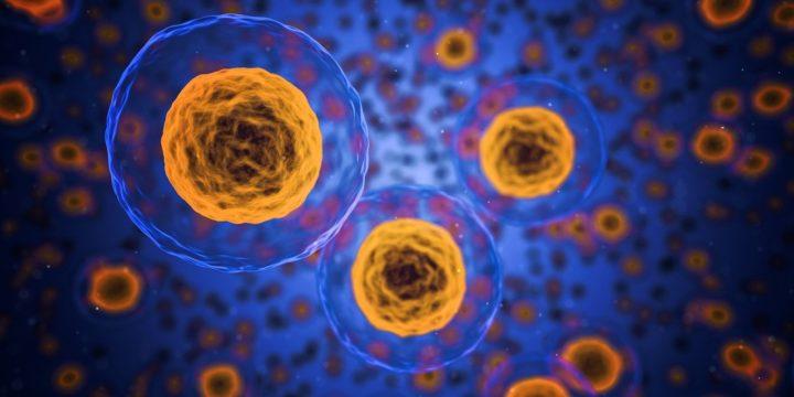 So kann das Immunsystem Corona den Giftzahn ziehen