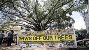 Kenya: non sarà abbattuto il fico sacro, ambientalisti in festa
