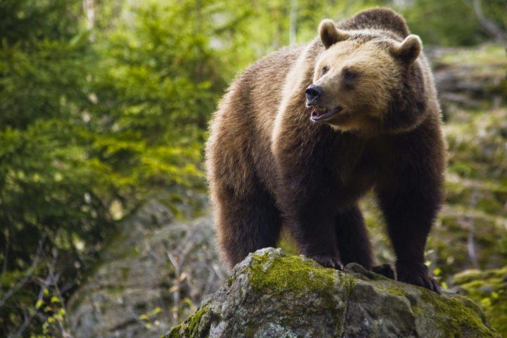 """Assemblea Antispecista: """"Fugatti ha rispetto istituzionale? Chiediamolo agli orsi del Casteller"""""""