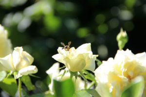 El armageddon de las abejas