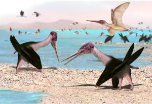 Pterosaurios de Chile: Los fantásticos «dragones» que dominaron los cielos