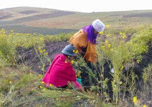 Ecuador: justicia fiscal, derechos comunitarios y lucha indígena