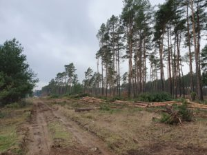 Forest clearance stop at Tesla – ÖDP and allies win in court