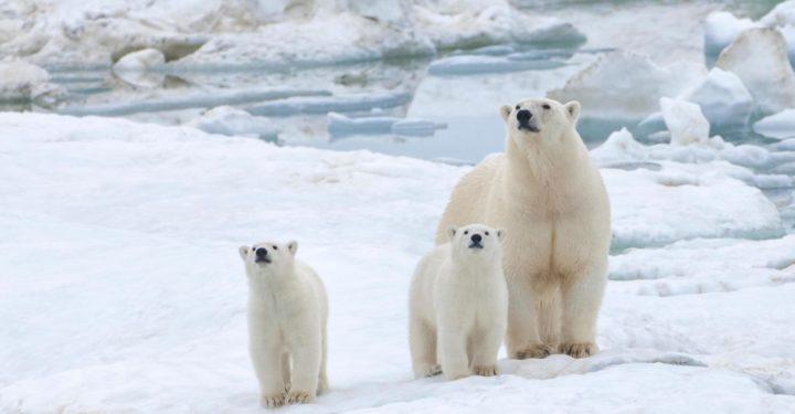 Respinta la proposta di trivellazione dell'Artico avvallata da Trump