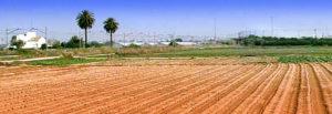Barcelona capital mundial de l'alimentació sostenible agafa el relleu de Milà i València
