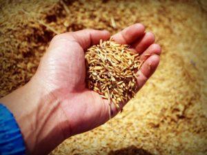 Crise no abastecimento de arroz cria oportunidades