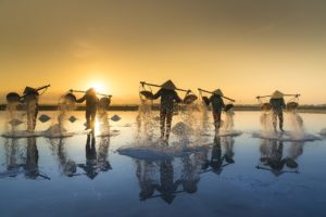 Cooperativas vietnamitas por progreso propio y de economía nacional