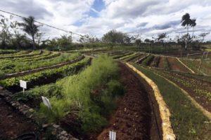 Una finca cubana desarrolla una sostenibilidad hecha a mano