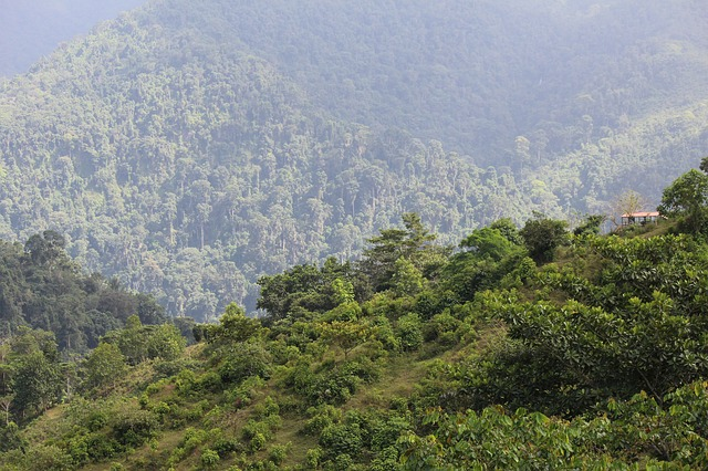 Colombia: Guardaparques sin garantías para proteger la biodiversidad