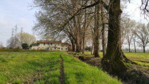 Milano, acqua e gestione del verde. Lettera aperta delle associazioni