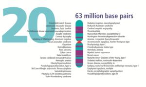 Genoma Humano 20 anos depois: legado e complicações