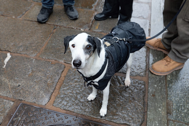 Manifestazione Animalista 11