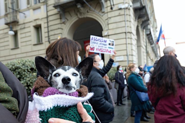 Manifestazione Animalista 19