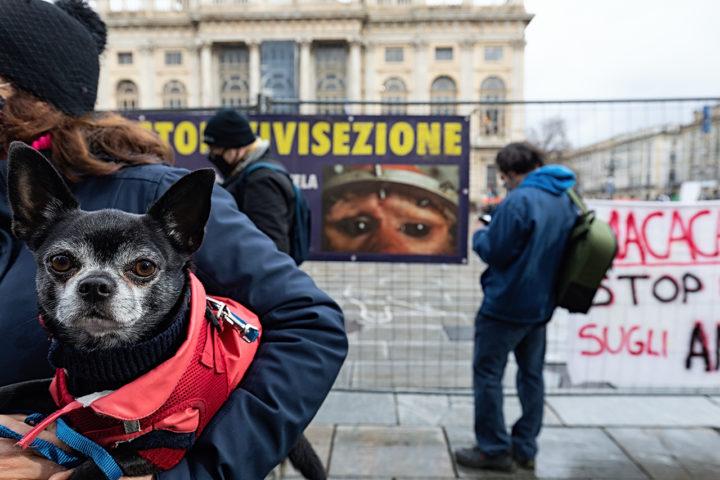 Animalisti: rabbia in piazza dopo la sentenza del Consiglio di Stato