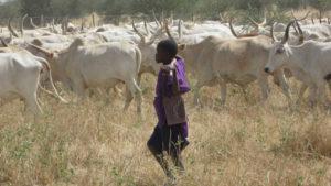 Nigeria, un kalashnikov per due mucche: pace fatta nello Zamfara