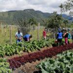 Colombia: en Huila, víctimas y victimarios siembran la paz